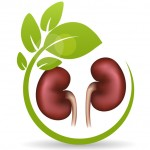 Kidney Transplantation is not a Cure